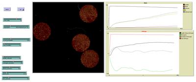 Hier sieht man das dynamische Infektionsgeschehen in Netlogo.